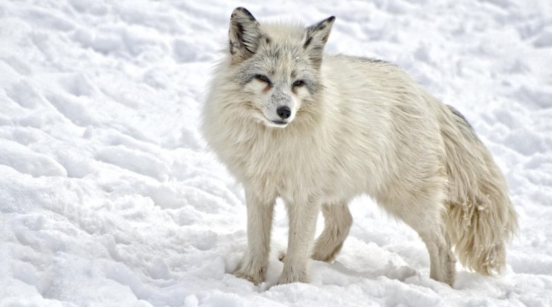 SILVER FOXES ARE ALL THE FASHION