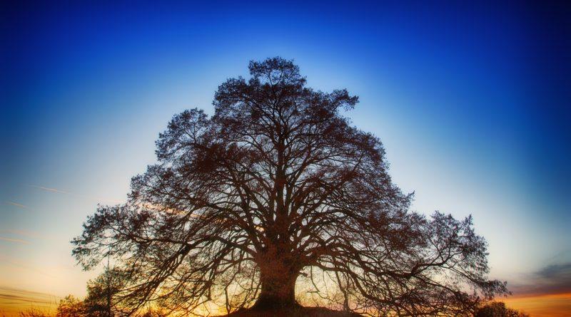 tree-3124103_1280