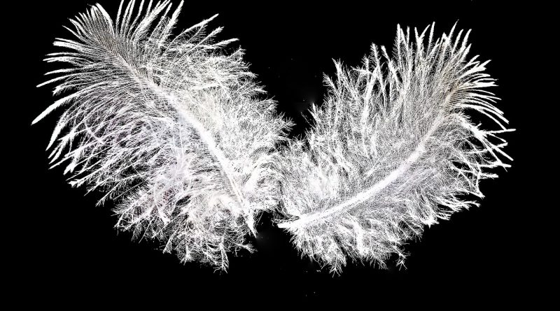 feather-2399237_1280